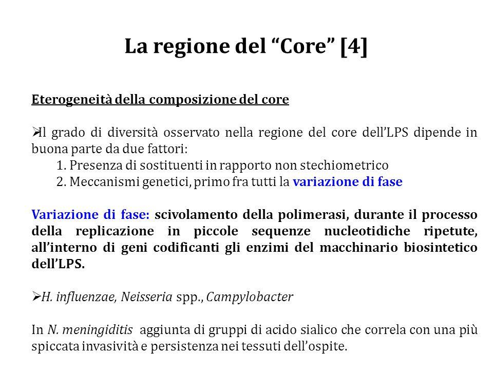 La regione del Core [4]